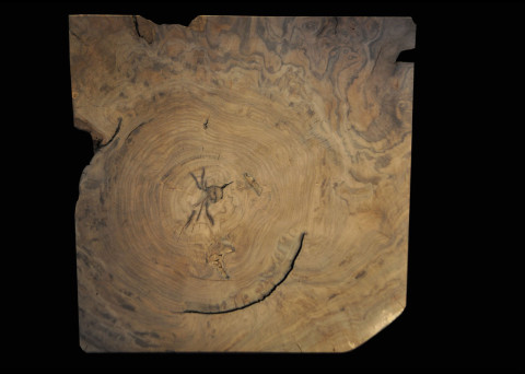Claro-walnut Burl Cross-section 24x24